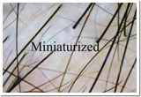 miniaturiazed hair